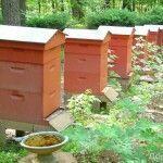 Пчеловодство: путеводитель по веб-сайтам