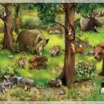 О тех, кто живет в лесу
