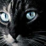 Кошки  — загадочные и неповторимые